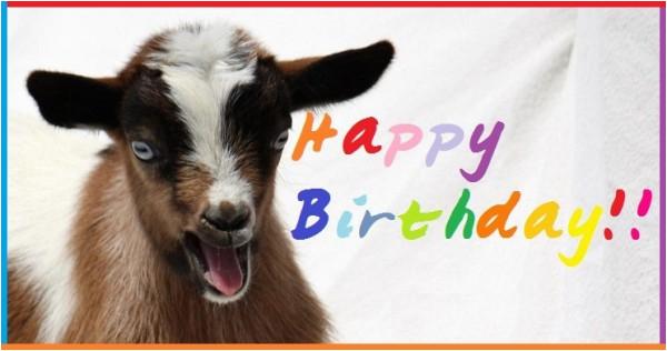 Baby Goat Birthday Card Birthdaybuzz