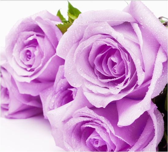 flowers for girlfriend birthday flowers and gifts shop