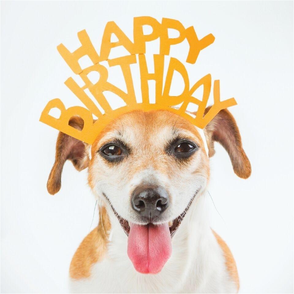 greeting card dog wearing happy birthday crown