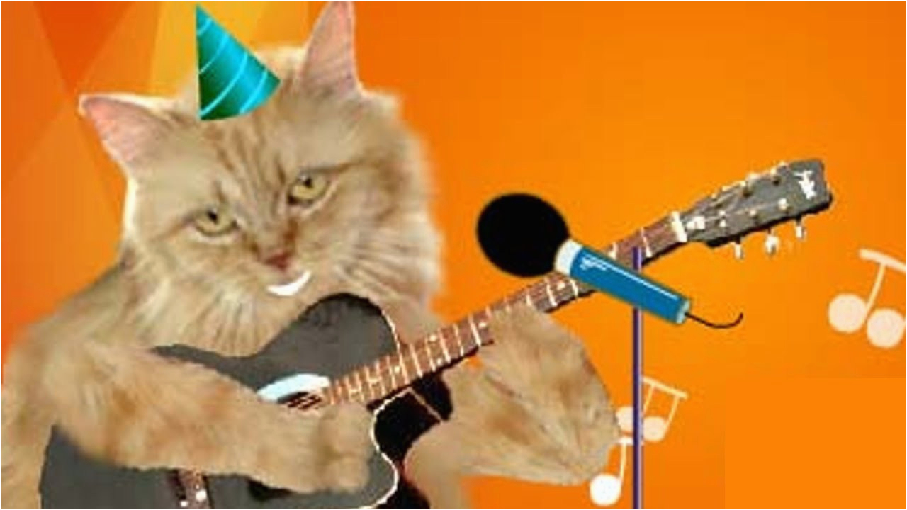 cute cats singing happy birthday with ukulele youtube cat