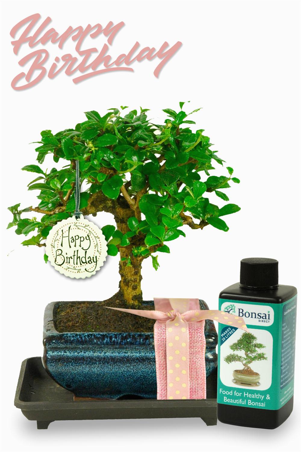 unusual birthday gift for her baby bonsai gift