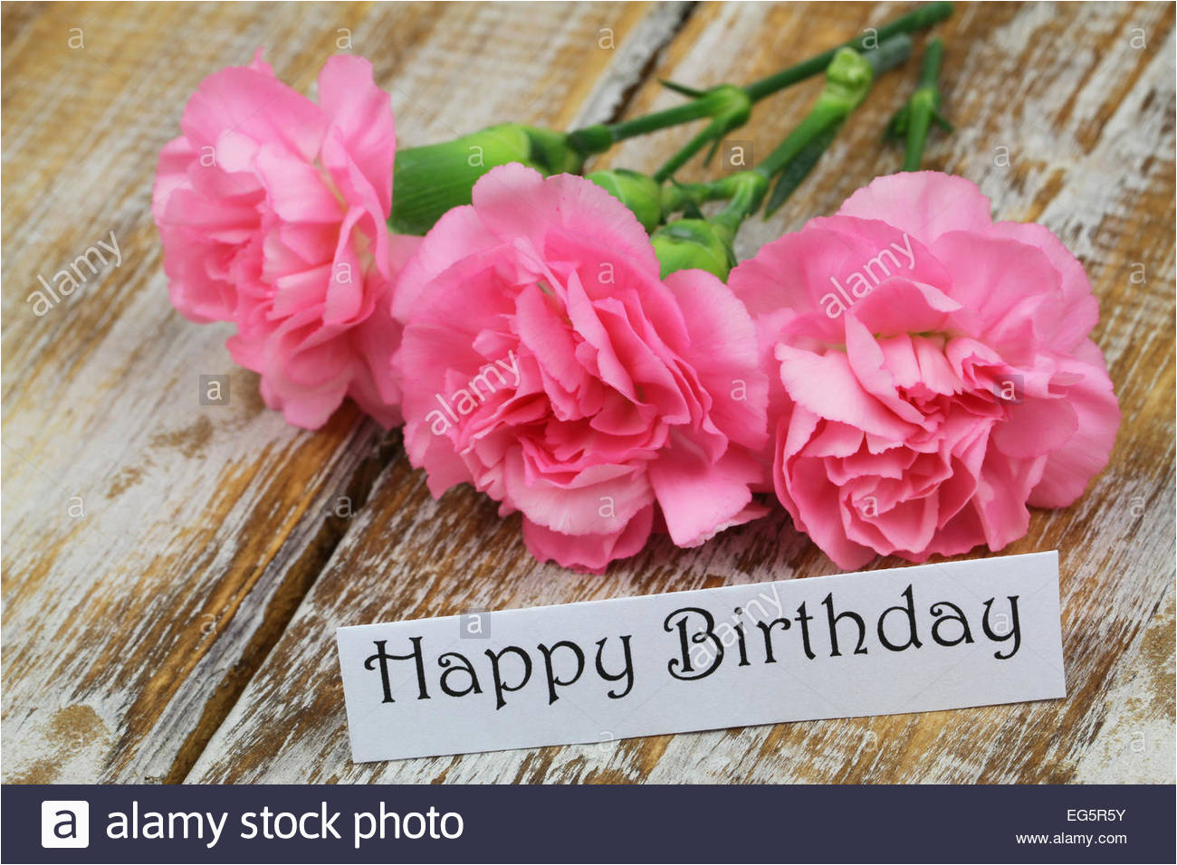 happy birthday card with pink carnation flowers stock