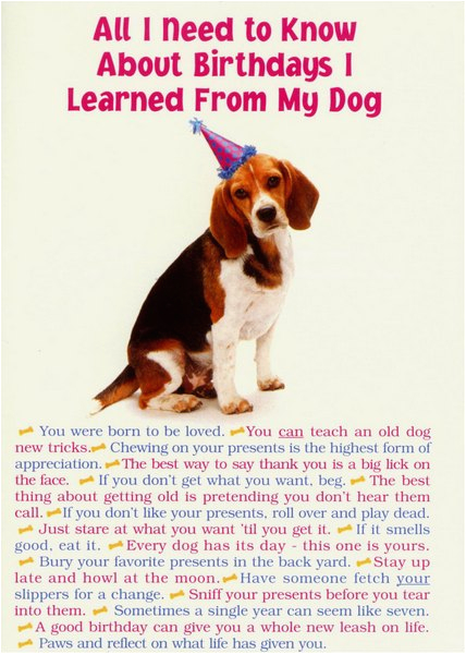 all i need from dog funny humorous birthday card by