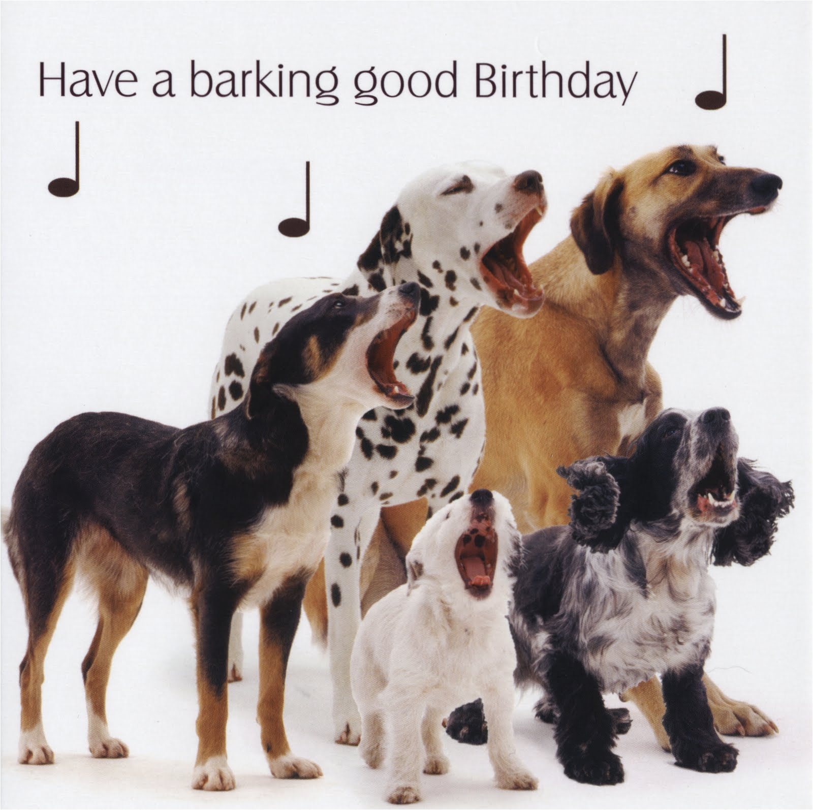 birthday quotes from dogs quotesgram
