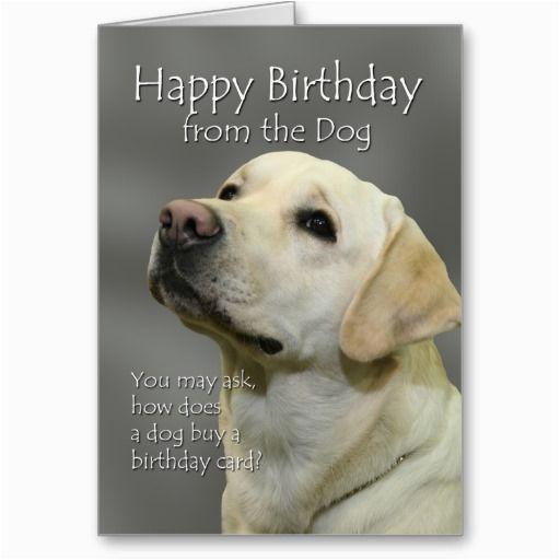 happy birthday from the dog yellow labrador birthday