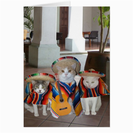 Funny Birthday Cards In Spanish Cats For Anyone Card Zazzle
