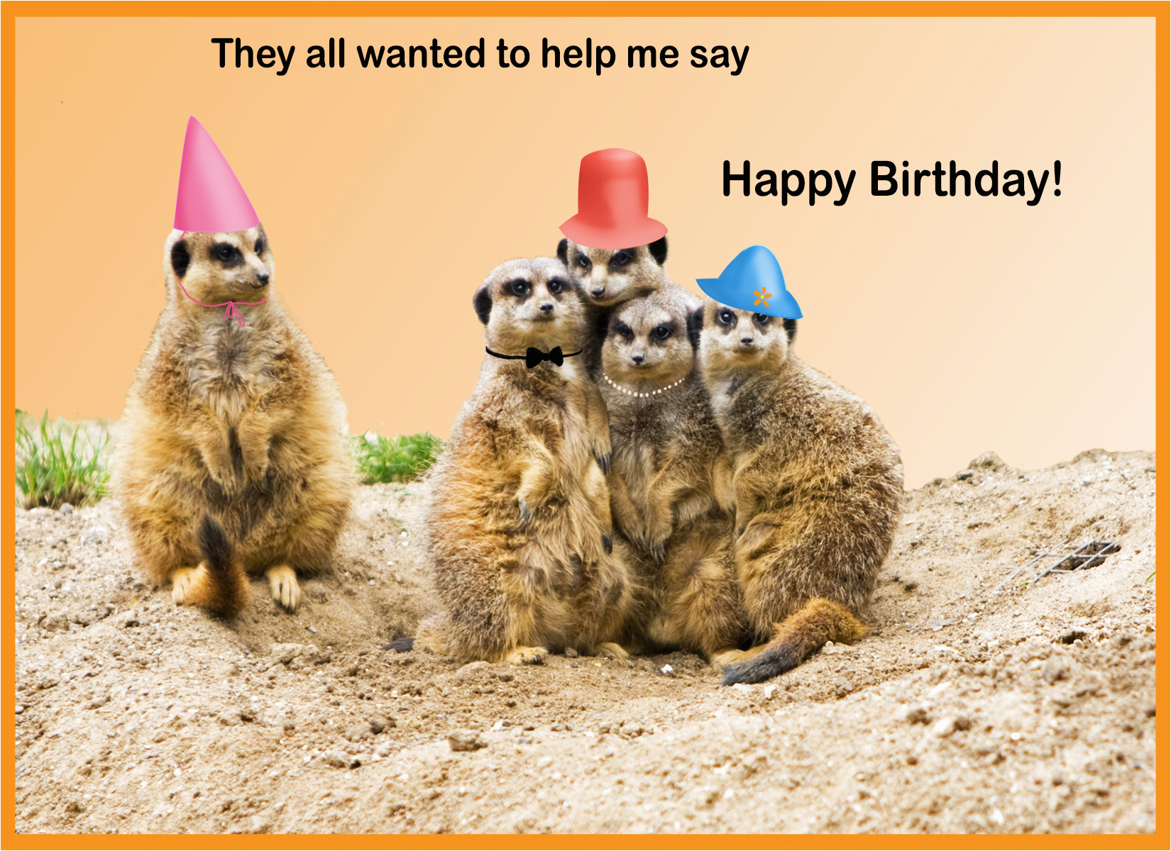 happy birthday cards with animals
