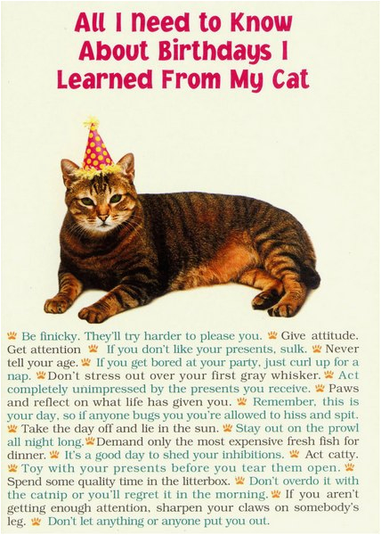 all i need from cat funny humorous birthday card by