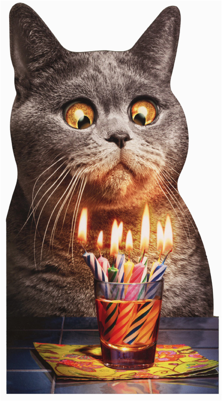 cat flaming shot oversized funny birthday card