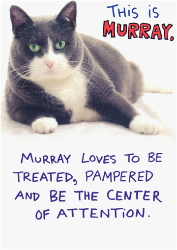 Funny Birthday Cards With Cats Murray Humorous Cat Card By Recycled