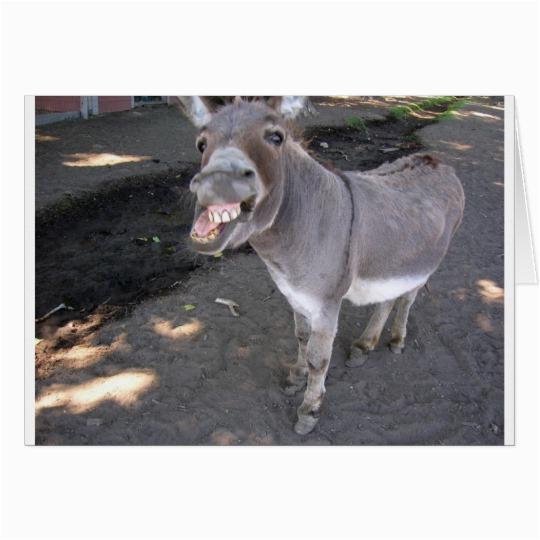 birthday card donkey funny humor friend insult card 137039433885509228