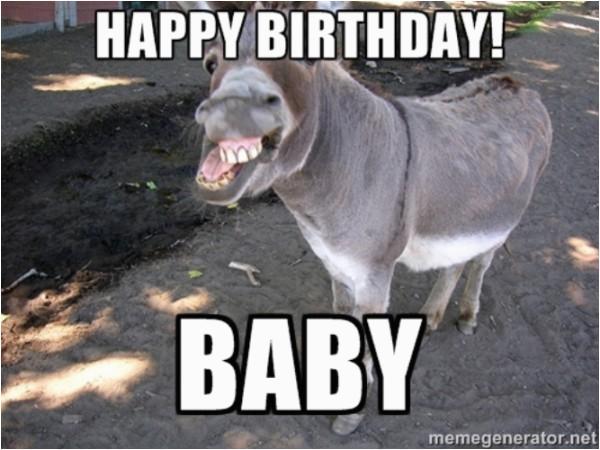 happy birthday donkey