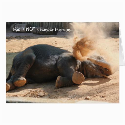 funny elephant belated birthday card zazzle