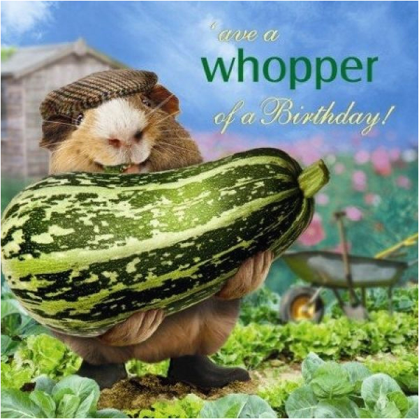Funny Gardening Birthday Cards Funny Guinea Pig Birthday Card What A whopper Vegetable