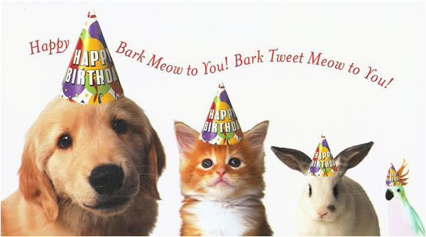 Happy Birthday Cards Dog Lovers Animal Pictures
