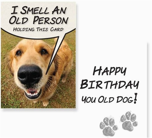 Birthday Wishes For A Dog Lover