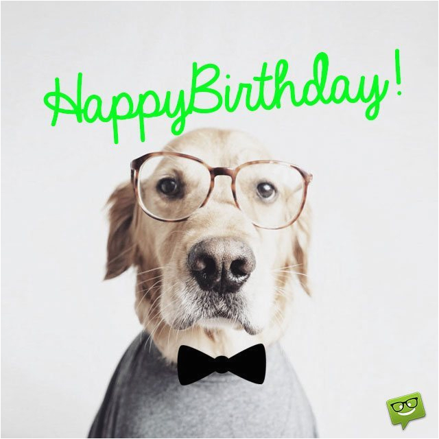 Happy Birthday Cards For Dogs 41 Best Funny Wishes Boy Girl Aunt