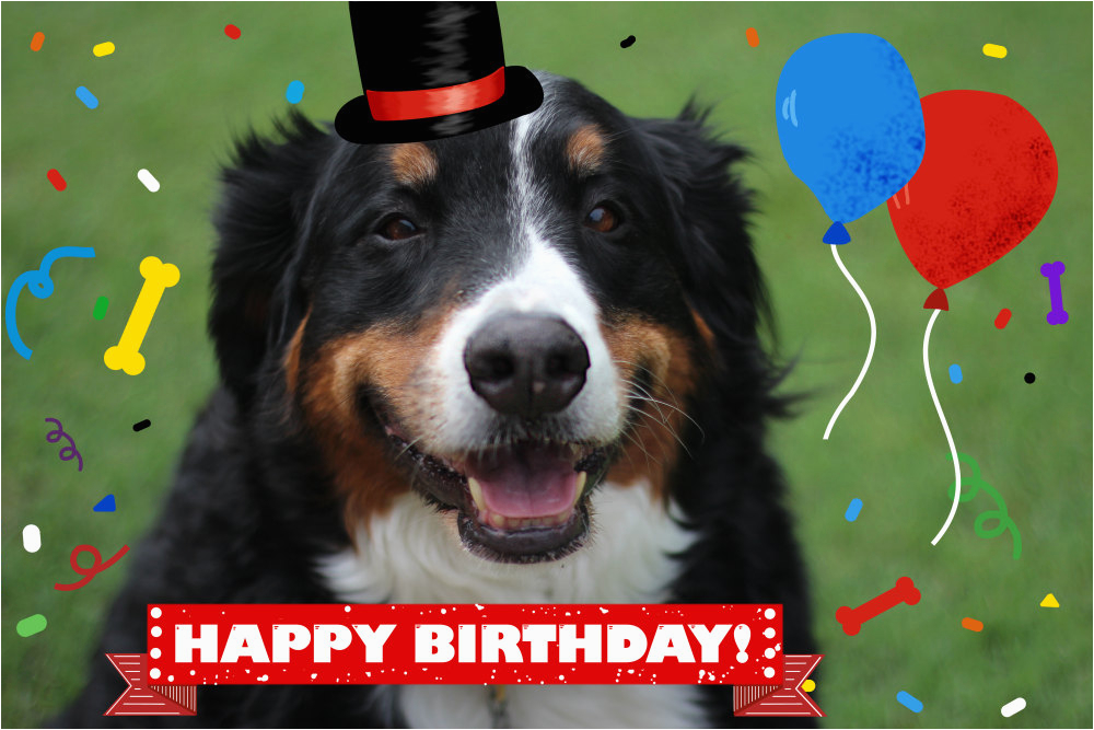 Happy Birthday Cards With Dogs Dog And Cat Card From Pet