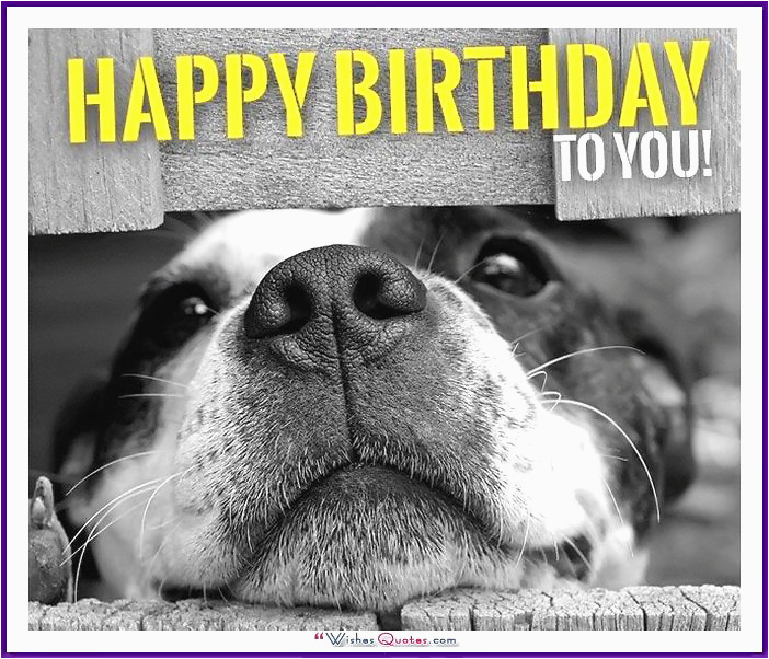 Happy Birthday Cards With Dogs Memes Funny Cats And Cute