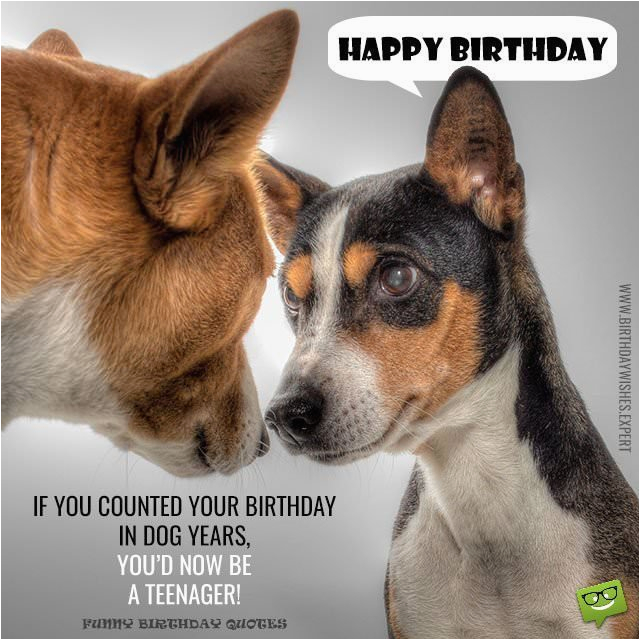 Happy Birthday Cards With Dogs Huge List Of Funny Messages Wishes Cracking Jokes