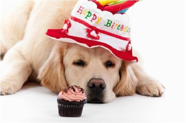 happy birthday dog birthday wishes for dogs