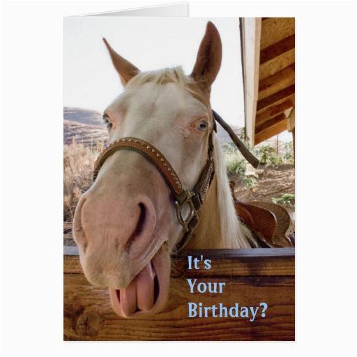 horse birthday cards 137754602360152140