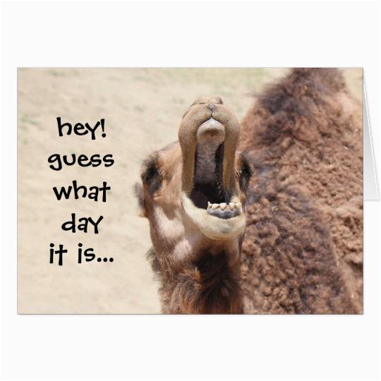 funny camel hump day birthday card zazzle com