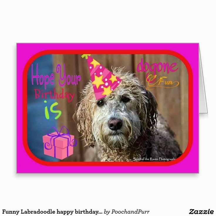 pooches and purrs pet store zazzle