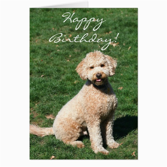 happy birthday mini goldendoodle greeting card 137130951125484390