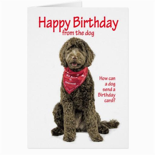 Labradoodle Birthday Card Labradoodle Birthday Card Zazzle