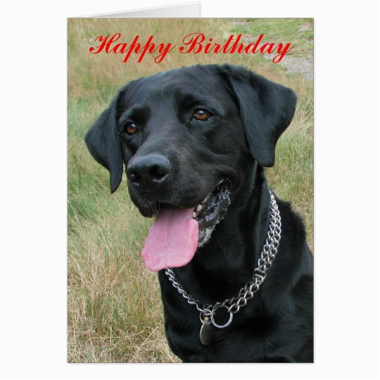 labrador retriever dog happy birthday card 137491940318182874