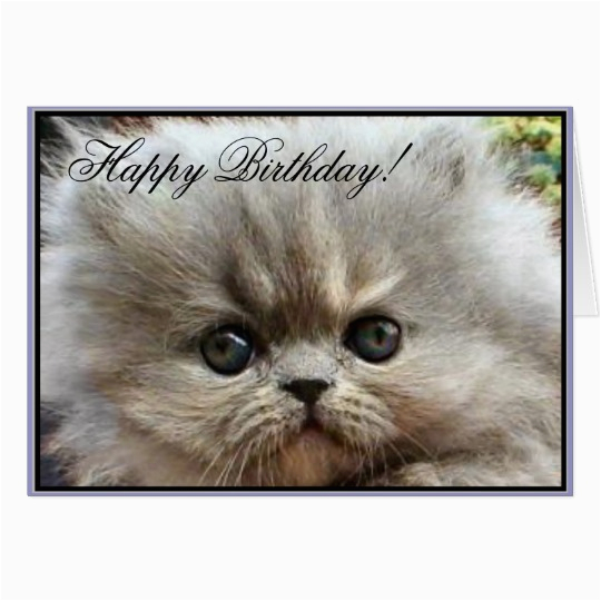 happy birthday persian kitten greeting card zazzle ca