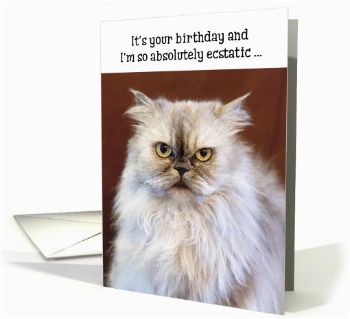 Persian Birthday Cards Humorous Birthday Card Ecstatic Persian Cat Card 1370848