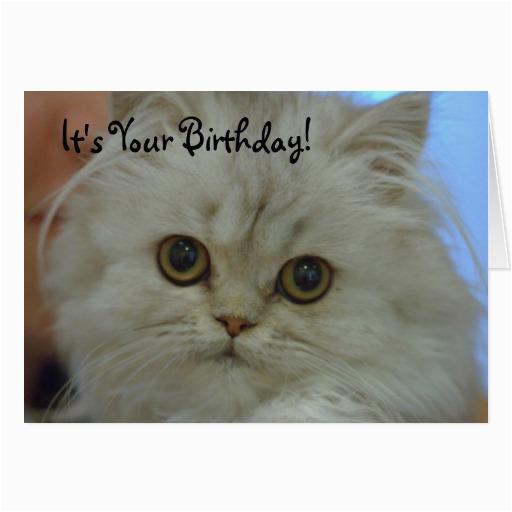 persian kitten birthday card zazzle
