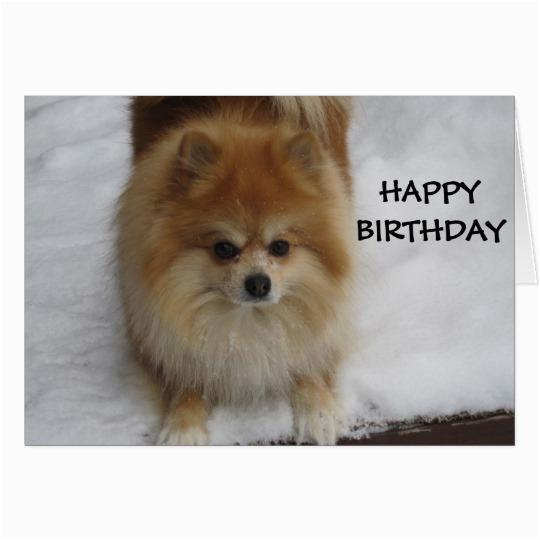 Pomeranian Birthday Card Happy Birthday Says the Pomeranian Card Zazzle Com