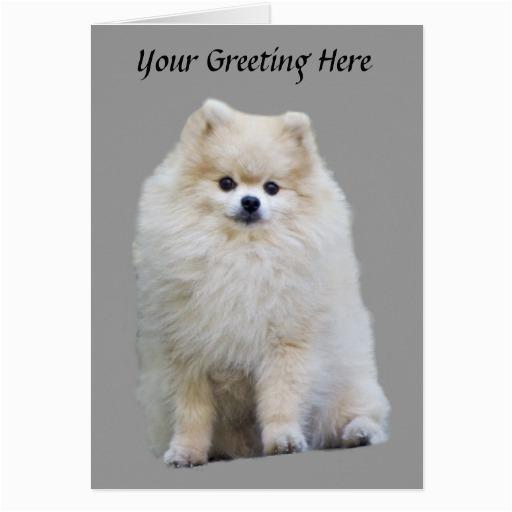 pomeranian greeting card 137406442613243214