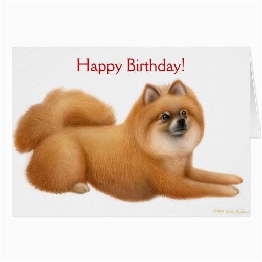 pomeranian happy birthday card 137507848290598831