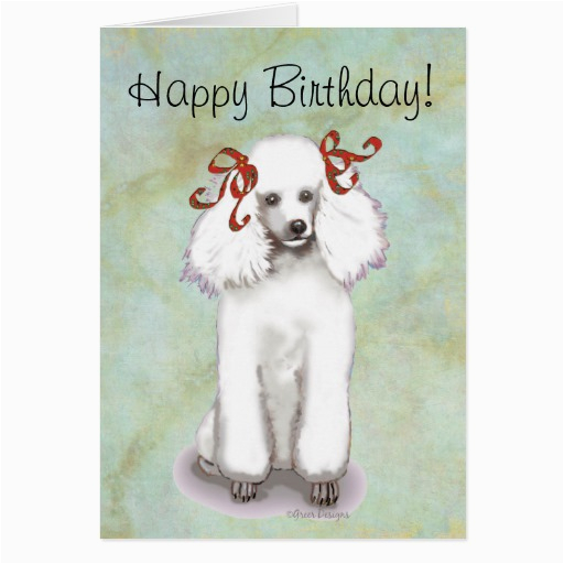 white poodle birthday card 137961148128428982