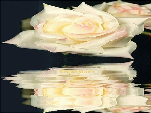 Riversongs Birthday Cards Love Of A Friend Poem Card Riversongs White Rose Greeting