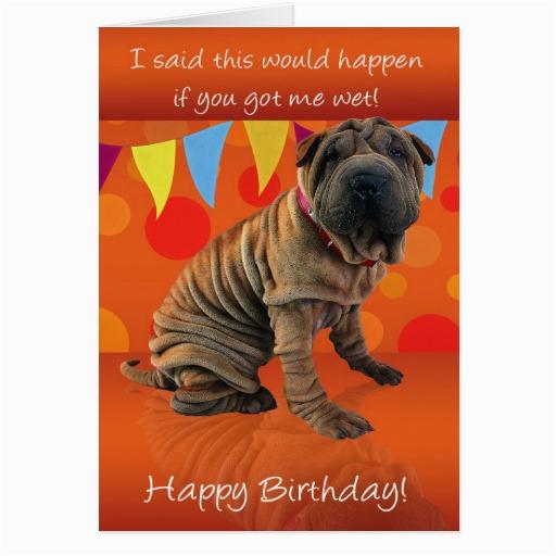 fun shar pei birthday card with birthday humor zazzle