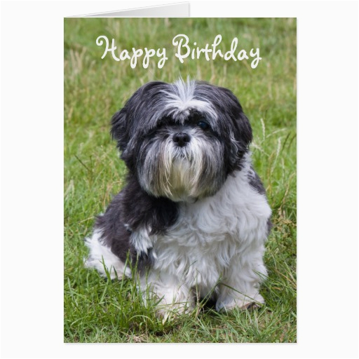 Shih Tzu Birthday Cards Shih Tzu Dog Cute Happy Birthday Greeting Card Zazzle
