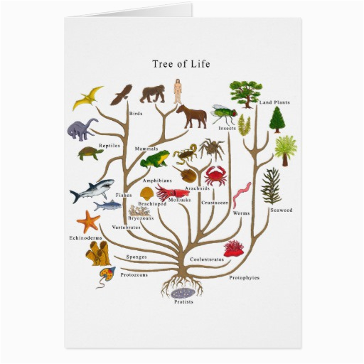 tree of life greeting cards 137575857683879563