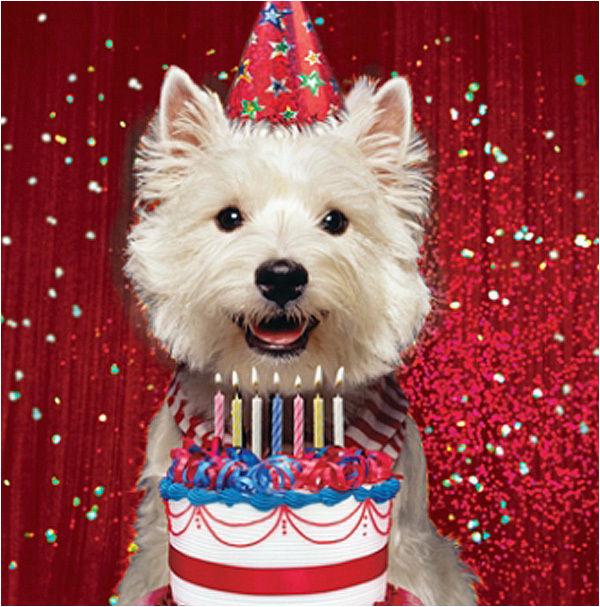 Westie Birthday Cards Westie Birthday Card Birthday Glitz West Highland White