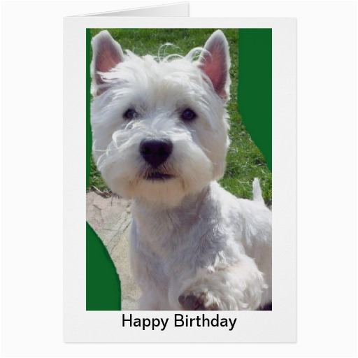 westie birthday card greetings card paw up 39 hello 39 zazzle
