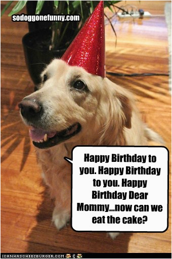 dog funny birthday quotes