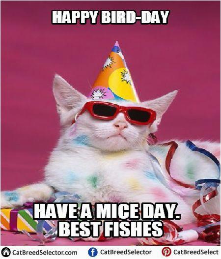 26 Birthday Meme Happy Birthday Wiches Best 26 Cat Birthday Meme