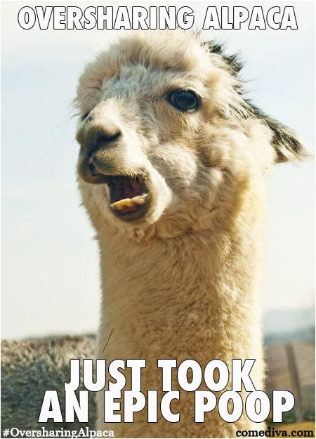 new meme oversharing alpaca