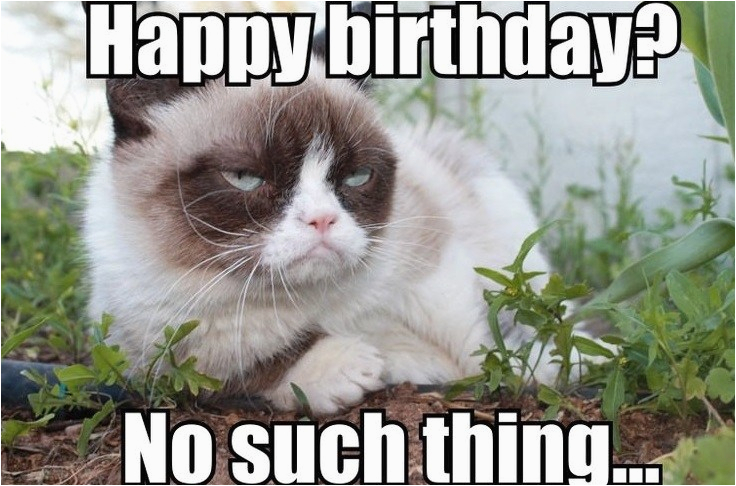 Angry Cat Birthday Meme 100 Best Happy Birthday Cat Memes ...