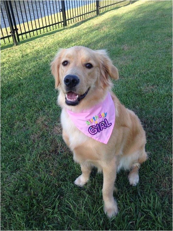 birthday girl or birthday boy dog