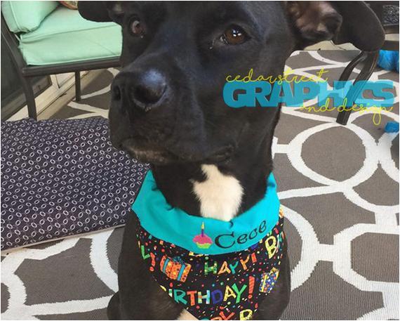 birthday girl dog bandana dog birthday